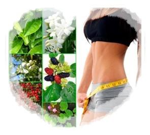 Herbal Pelangsing Badan Gemuk | Herbal Pelangsing Badan Gemuk